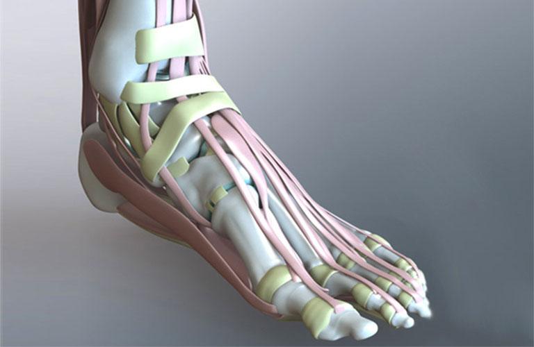 cấu tạo xương bàn chân