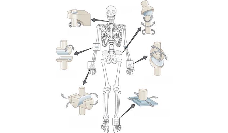 Chức năng của bộ xương