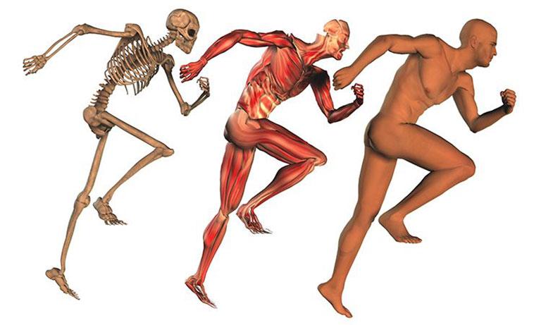 Chức năng của hệ cơ và hệ xương