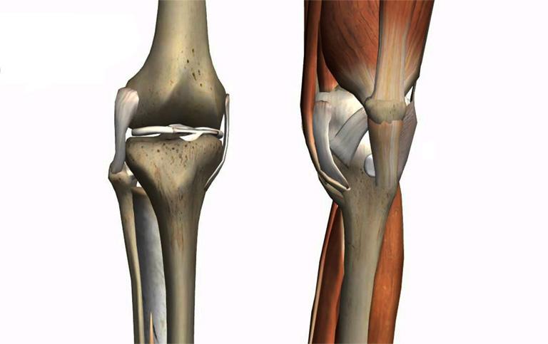 cấu tạo khớp xương người