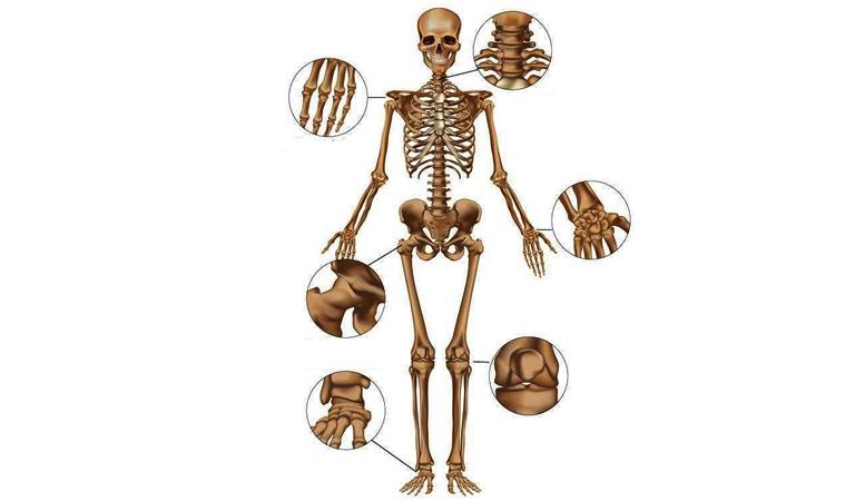 Khớp xương