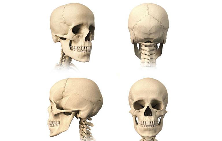 cấu tạo các khớp xương