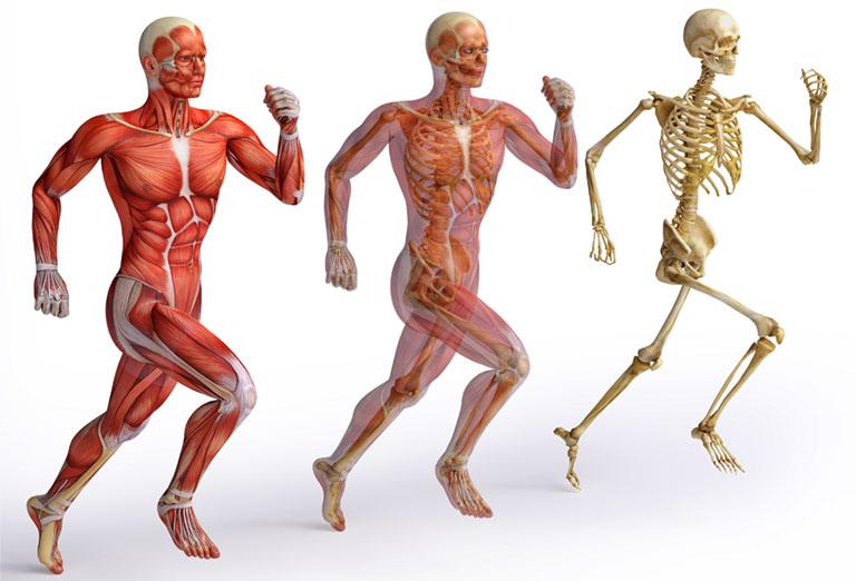chức năng của xương