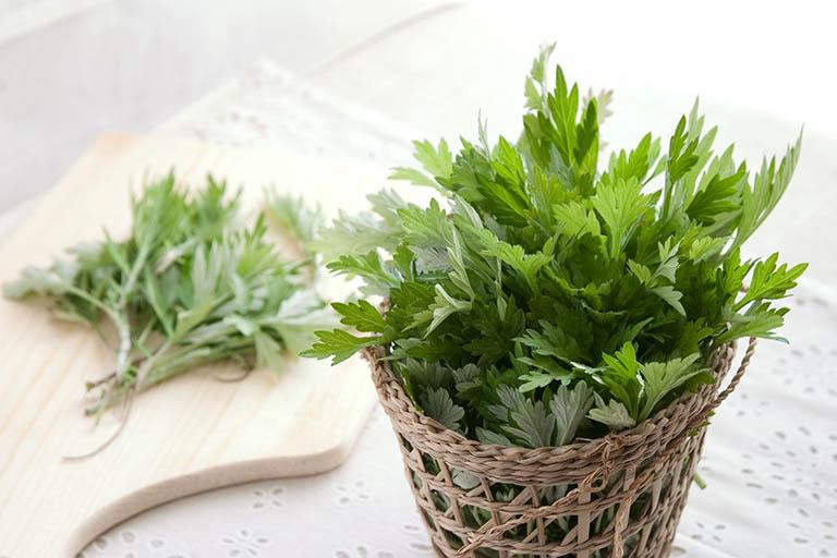 Bài thuốc dùng cây ngải cứu giảm đau nhức do thoái hóa cột sống