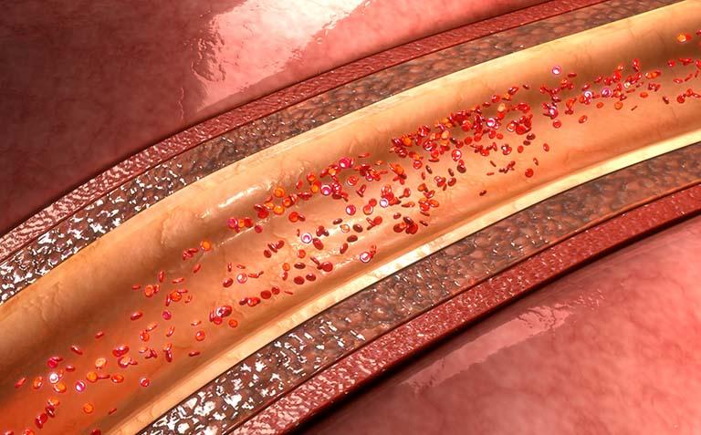 Tế bào cơ trơn xuất hiện trong thành của các lối đi và trong thành của những cơ quan rỗng