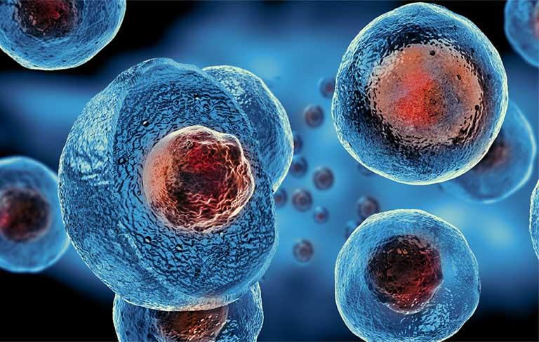 Chính thức cấp phép chữa thoái hóa khớp gối bằng tế bào gốc