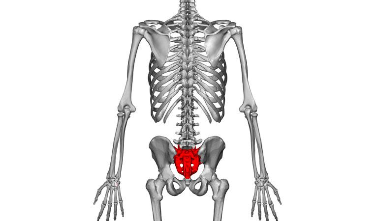 chức năng của xương cùng