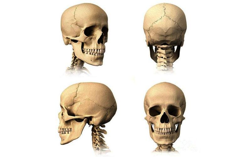 Xương sọ người