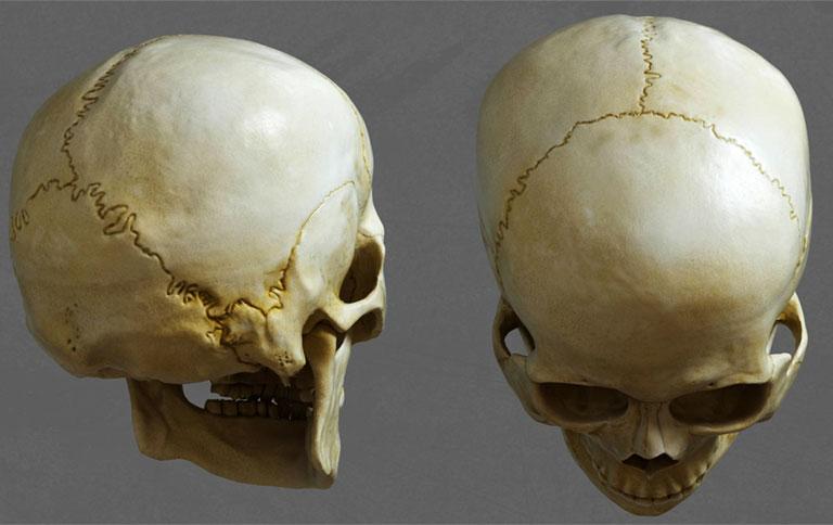 Mặt trên và mặt sau của sọ