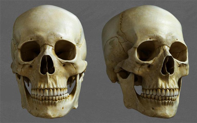 Mặt trước của hộp sọ người