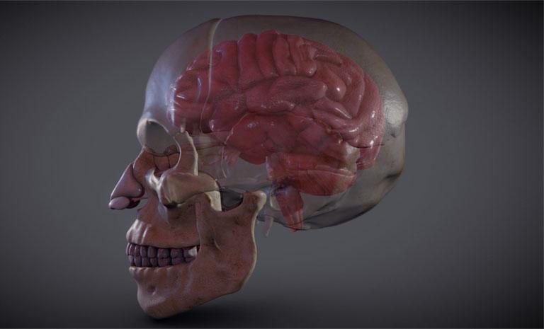 hộp sọ người có chức năng gì