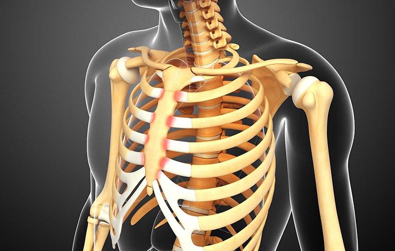 Chức năng của xương ức