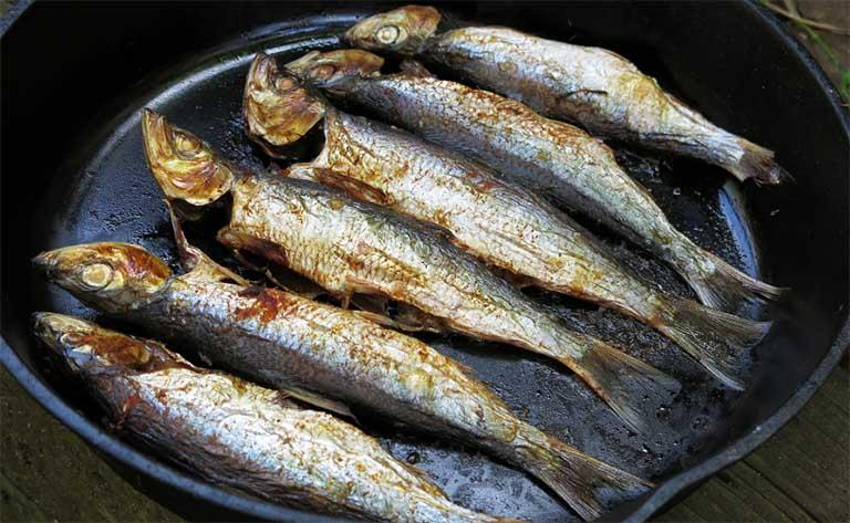 bệnh gút kiêng cá gì
