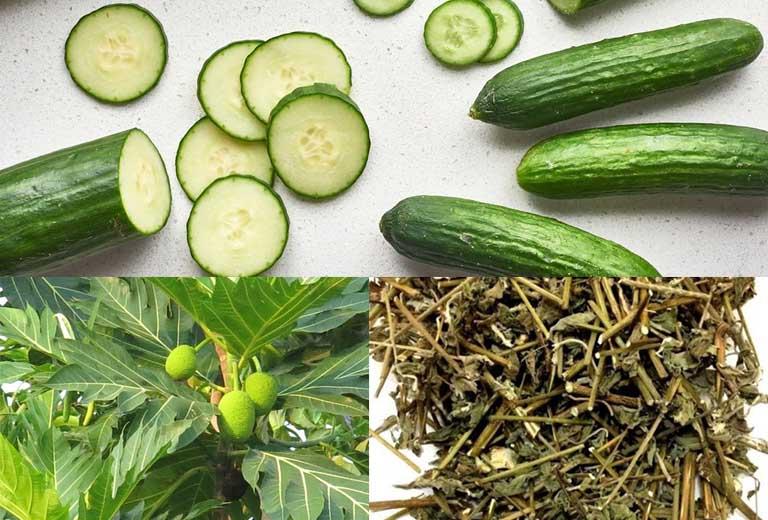 Cách dùng lá sa kê kết hợp dưa leo và cỏ xước điều trị bệnh gout