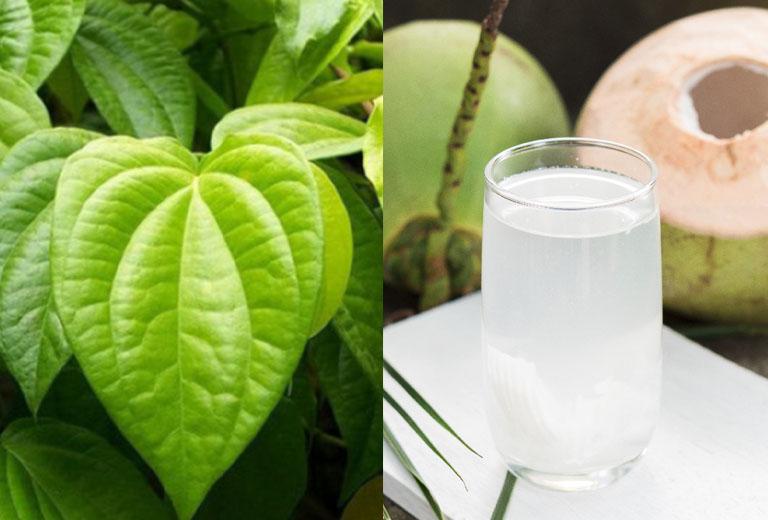 Hướng dẫn cáchchữa bệnh gout bằng nước dừa và lá trầu không