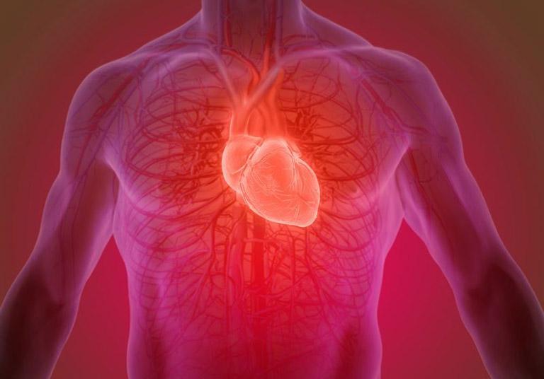 Cơ tim chỉ được tìm thấy trong tim của bạn