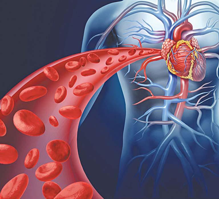 Cơ tim có chức năng đẩy máu lưu thông trong hệ tuần hoàn