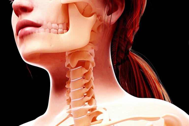 Cấu tạo xương hàm dưới