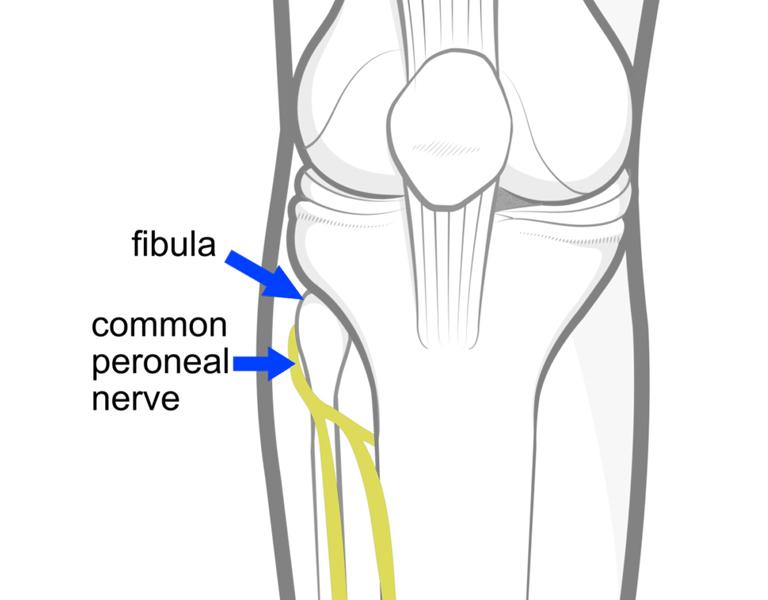Phần gần của xương mác được cấu tạo ở dạng một phần tư không đều