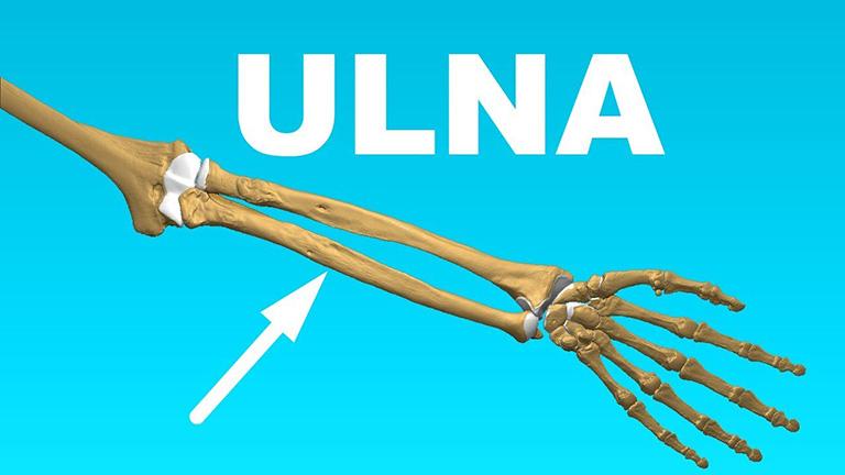 Thân xương trụ