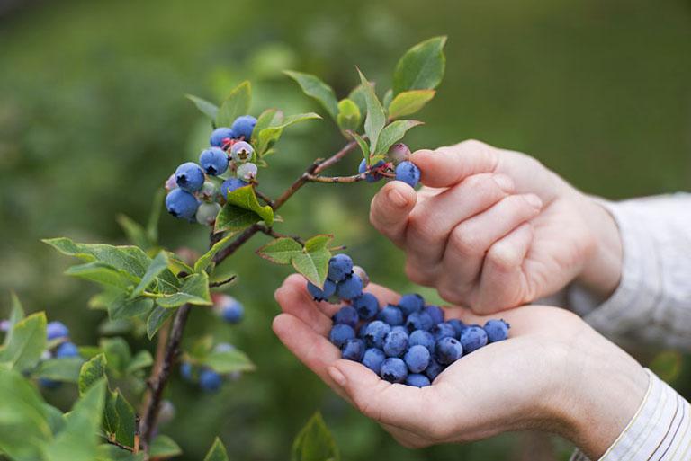 cách chọn trái cây cho người bị gút