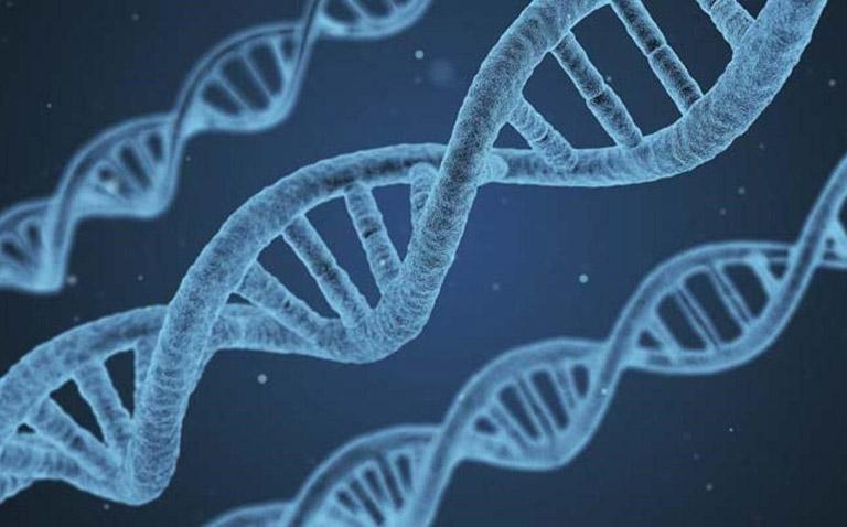 Nguy cơ mắc bệnh lupus ban đỏ sẽ tăng cao ở những trẻ có gia đình mắc bệnh.