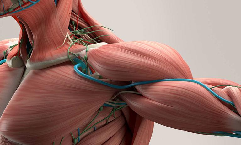 Hội chứng lối thoát ngực