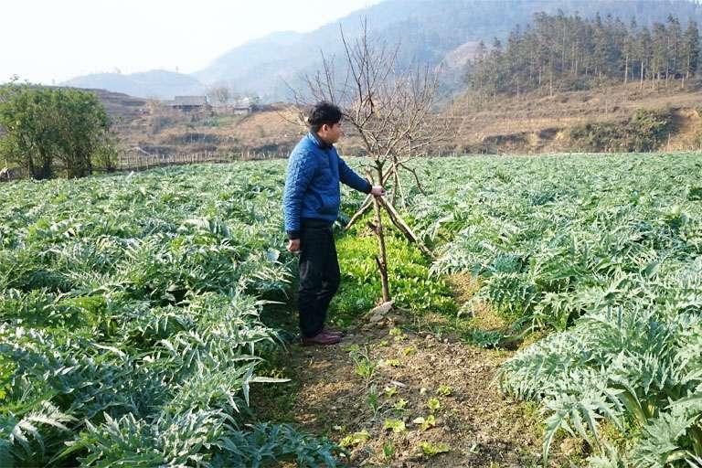 Dược liệu được bào chế từ 100% nam dược trồng tại Việt Nam