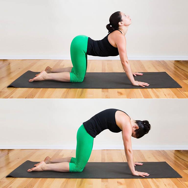 Bài tập yoga tư thế mèo - bò